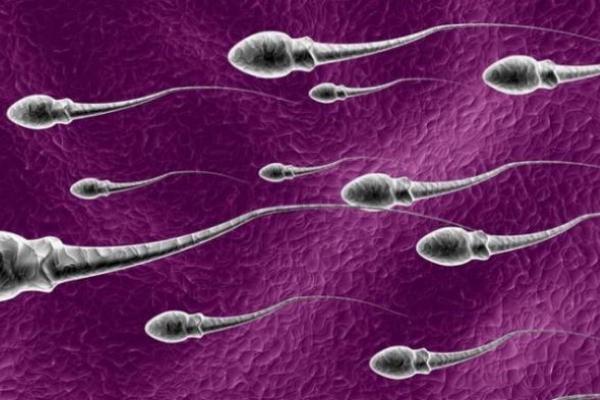 Kandungan dan manfaat sperma