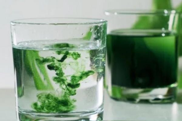 Manfaat minum klorofil